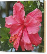 Pink Hibiscus Flower On A Tree Wood Print
