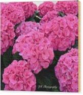Pink Hydrangeas Wood Print