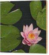 Pink Lotus Waterlily Wood Print