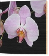 Pink Orchid Vii Wood Print