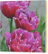 Pink Parrot Tulips Wood Print