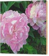 Pink White Peonies  Wood Print