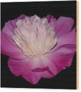 Pink Peony Petals Wood Print
