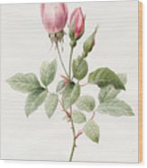 Pink Rose And Buds Wood Print