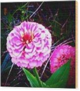 Pink Zinnia's Wood Print