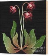 Pitcher Plant Flowers, X-ray Wood Print
