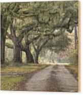 Plantation Drive Live Oaks  Wood Print