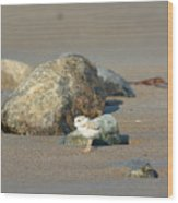 Plover Chick Wood Print