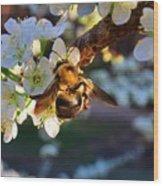 Plum Full Of Bees Wood Print