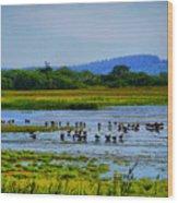 Plum Island Wood Print