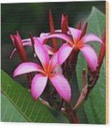 Plumeria Flowers 4 Wood Print