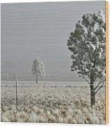 Pogonip Frosty Morning Wood Print
