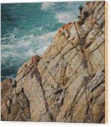 Point Lobos California Wood Print