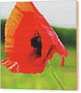 Poppy The Beauty Wood Print