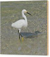 Posing White Egret Bird Wood Print