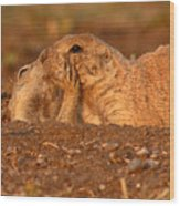 Prairie Dog Tender Sunset Kiss Wood Print