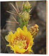 Prickly Bloom Wood Print