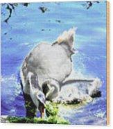 Psychedelic Mute Swan And Cygnet Feeding Wood Print