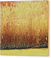 Pueblo Downtown River Grasses 4 Wood Print