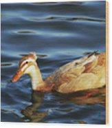 Puffy Headed Duck Wood Print