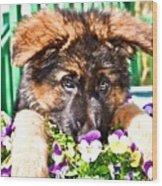 Puppy Oskar Wood Print