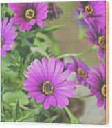 Purple Aster Flowers Wood Print