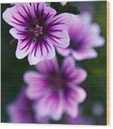 Purple Beauties Wood Print