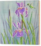 Purple Dutch Iris And Hummer Wood Print
