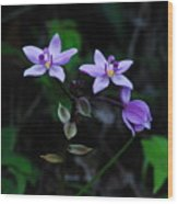 Purple Orchids 2 Wood Print