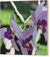 Purple Orchids Wood Print