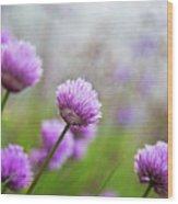 Purple Spring 7 Wood Print