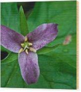 Purple Trillium Wood Print