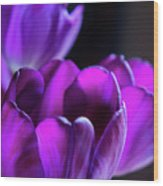 Purple Tulips 1 Wood Print