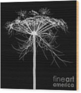 Queen Annes Lace, X-ray Wood Print