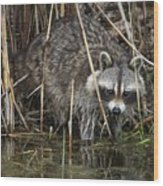 Raccoon Fishing Wood Print