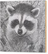 Raccoon Kit Wood Print