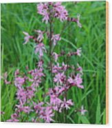 Ragged Robin Wood Print