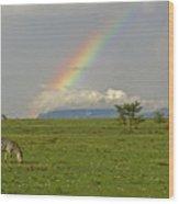 Rainbow Over The Masai Mara Wood Print
