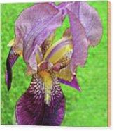 Raindrops On Purple And Yellow Iris Wood Print