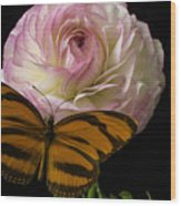 Ranunculus And Butterfly Wood Print