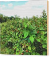 Raspberry Fields 2  Wood Print