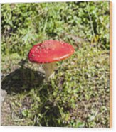 Red And White Potted Toadstool Wood Print