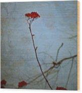 Red Berries Blue Sky Wood Print