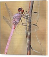 Red Dragonfly Portrait Wood Print