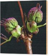 Red Elderberry Flower Buds Wood Print