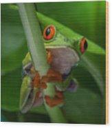 Red Eyed Tree Frog. Wood Print