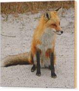 Red Fox 3 Wood Print