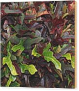 Red Green  Leaves Wood Print