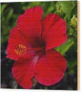 Red Hibiscus - Kauai Wood Print