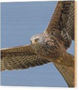 Red Kite Wood Print